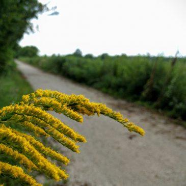 The Prairie Spirit Trail Blossoms in Late Summer