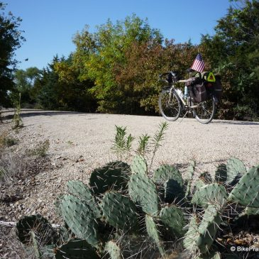 Prairie Spirit Trail Cactus